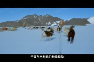 2012年狂犬病日宣传片
